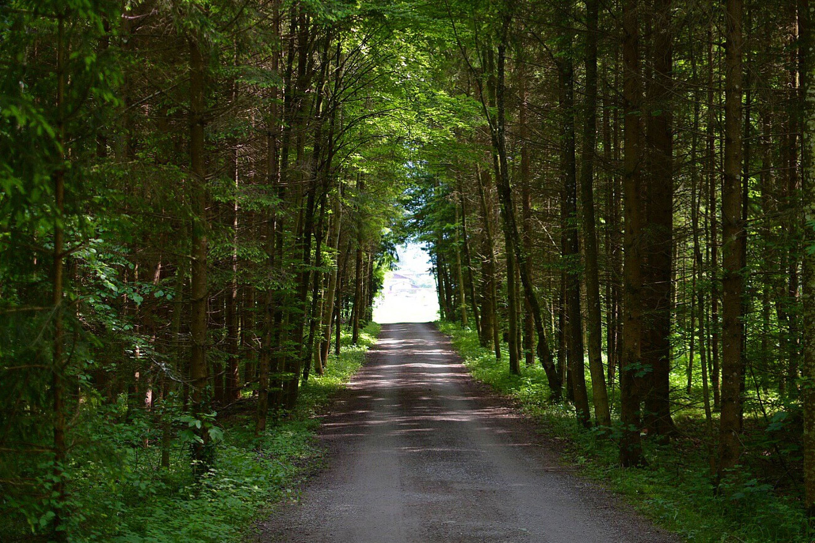 the way forward, tree, diminishing perspective, vanishing point, tranquility, forest, tranquil scene, nature, growth, narrow, dirt road, footpath, pathway, green color, treelined, tree trunk, road, beauty in nature, long, walkway