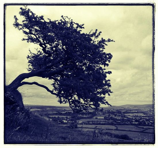 Brentor Brentor Windswept Tree Windswept Cross Process MonochromeMonochrome Landscape Tree Ragged Tree Tree Silhouette Devon Black And White Silhouette Silhouettes Tree Junkie