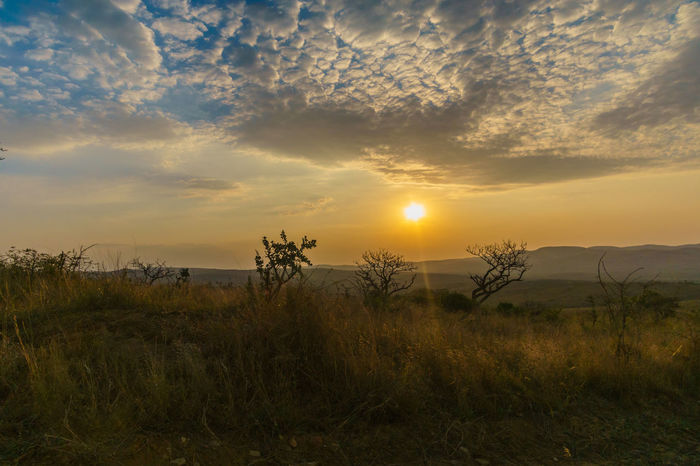 Enjoying the sunset while leaving the Hluhluwe-iMfolozi Nationalpark. Hluhluwe, South Africa EyeEm Nature Lover South Africa Travel Beauty In Nature Day Eye4photography  Field Grass Growth Landscape Nature No People Orange Color Outdoors Plant Scenics Sky Sony A6000 Sun Sunlight Sunset Tranquil Scene Tranquility Travel Destinations Tree