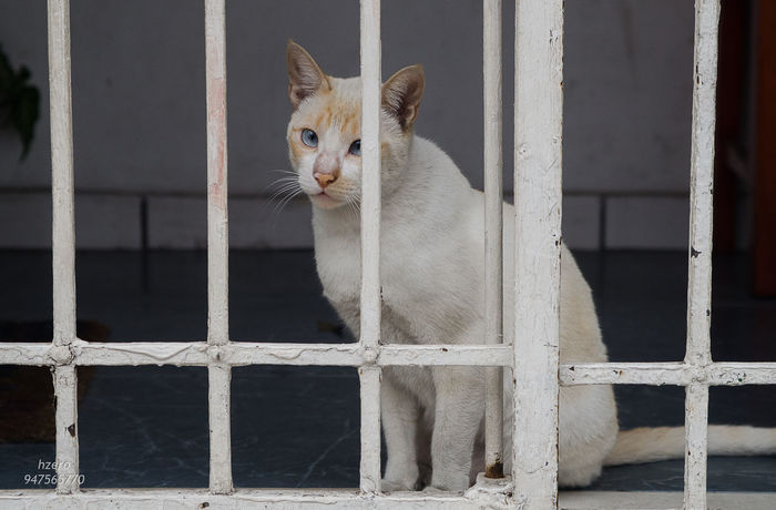 Animal Themes Cat Day Domestic Animals Domestic Cat Feline Focus On Foreground Mammal One Animal Pets Whisker