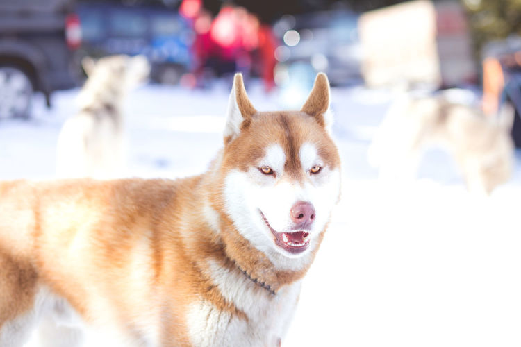 Close-up portrait of dog in winter