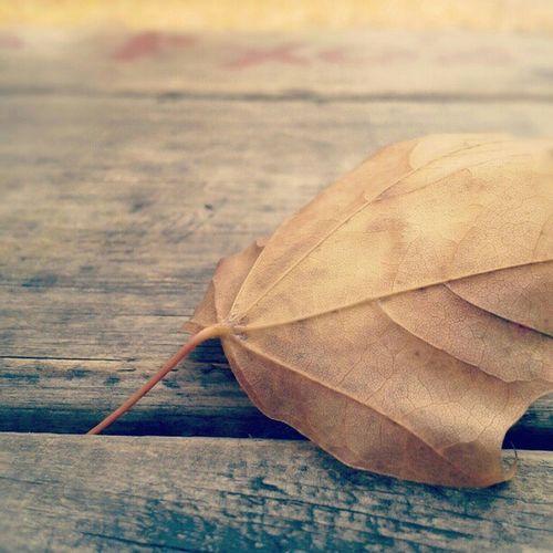 Fall Leaf Montreal, Canada
