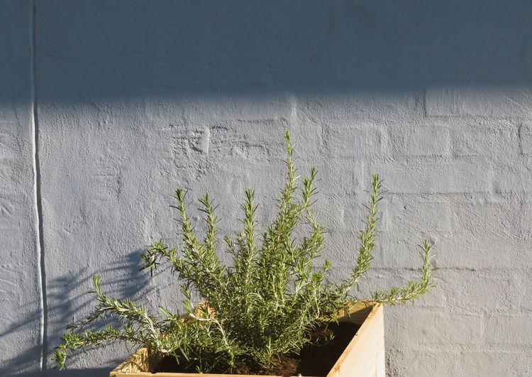 Flower Sunlight Close-up Plant Botany My Best Photo