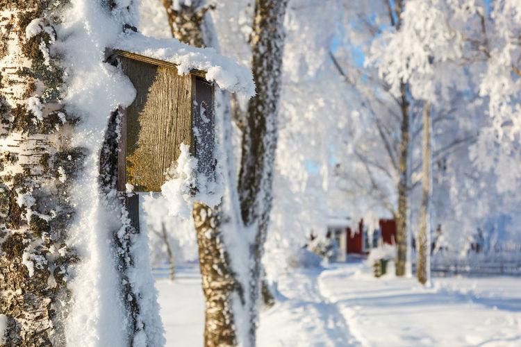 Close-up of snow covered birdhouse on tree
