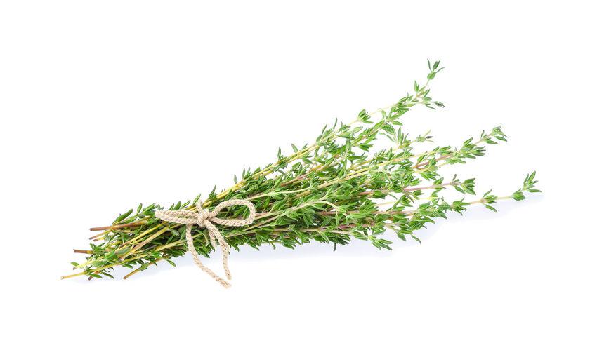 Botany Branch