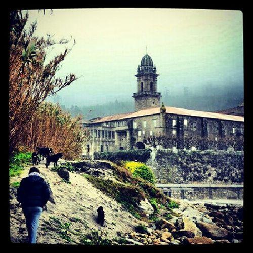 Friends Rain Dog Walking Dogs Galicia Vigo #landscape #nature #photography