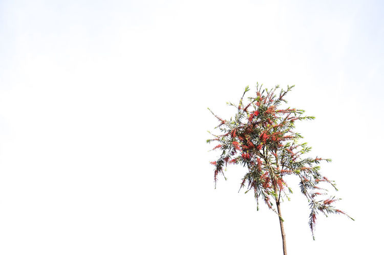 At Ease 🍂🥀 Stable Vacuum The Field Tree Flower Nature Branch Beauty In Nature Urban Nature Garden Copy Space White Space White Background MnM MnMl Mnmlsm Minimalism Minimal Minimalistic Minimalmood Minimalist Minimalobsession Minimalart Minimalarchy