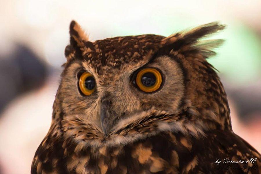 Miradas III / Glances III... EyeEm Best Shots EyeEm Birds Eyeem Fauna Portrait