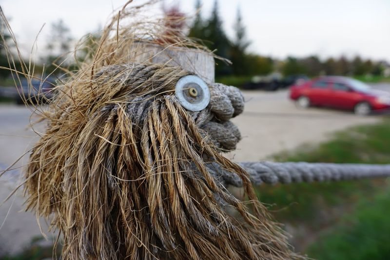 Funny figure in that Dew Fence which looks like a Crazy Day lion] dayOutdoors sOne Animal lClose-up pAnimal Themes sNo People eMammal lNature eFace In Objects s