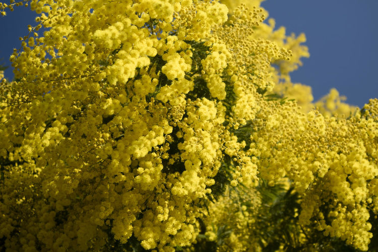 Flower Yellow Flowering Plant Beauty In Nature Plant Freshness Growth Fragility Vulnerability  Close-up Day Nature No People Flower Head Springtime Inflorescence Outdoors Vibrant Color Selective Focus Sunlight