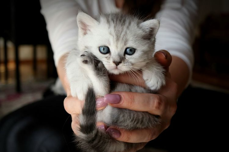Midsection of woman holding cute kitten at home