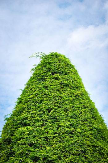 Beauty In Nature Cloud - Sky Covering Creeper Plant Day Foliage Green Color Growth Hedge Ivy Low Angle View Lush Foliage Moss Nature No People Outdoors Plant Sky Tall - High Tranquility Tree
