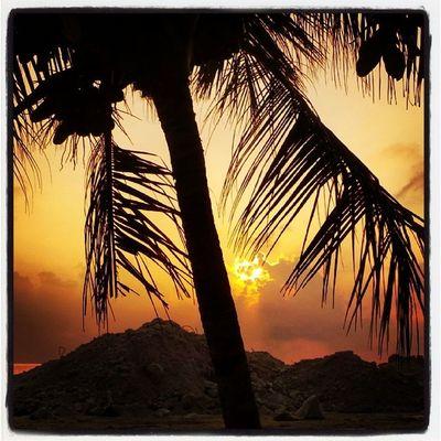 Gud Mornin Goodmornin Maldives Yellow Palmtree national tree nature natural beautiful black sky cloud kurinbee harbour sandbank mountain wisamsphotography keyovaley