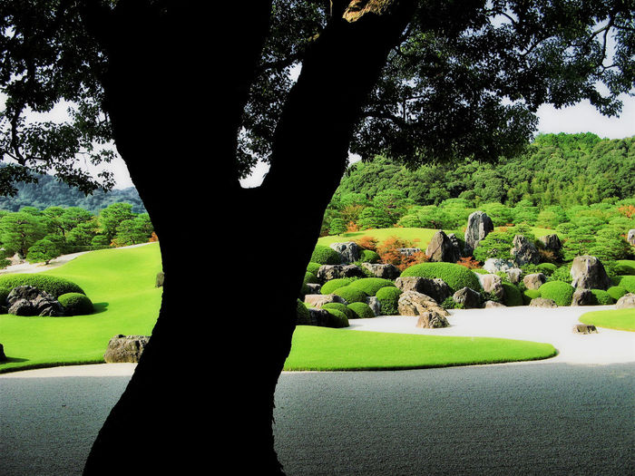 Beauty In Nature Day Grass Green Color Growth Japanese  Japanese Garden Nature Outdoors People Pine Tree Shadow Stones Tree