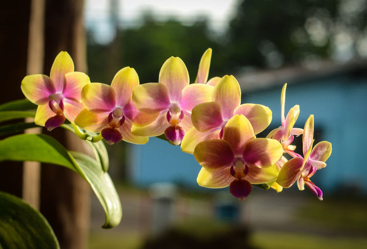Colorful orchid taken in bokeh. pictures taken in south sulawesi - indonesia.