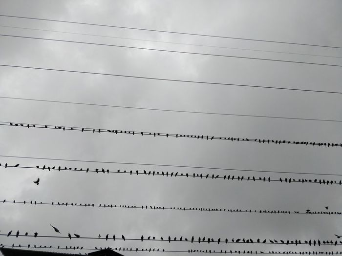 Architecture Building Exterior Built Structure Cable Cloud - Sky Connection Day Electricity  Flock Of Birds Full Frame In A Row Low Angle View Metal Nature No People Outdoors Power Line  Power Supply Silver Colored Sky Technology Vertebrate