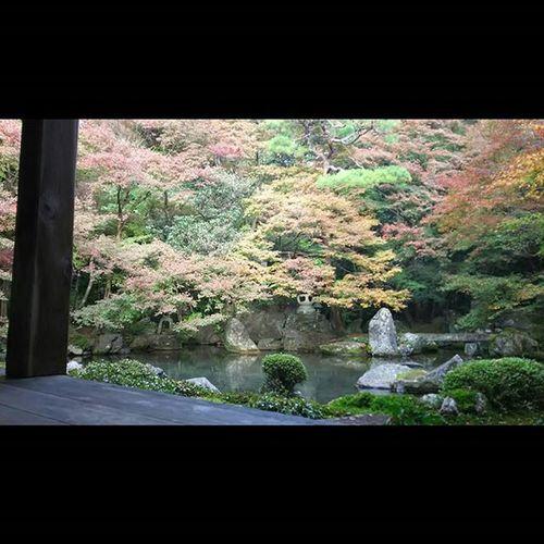 蓮華寺 2015.11.21 人が多過ぎていつもと違うアングル。 月一蓮華寺 蓮華寺 京都 Kyoto Temple Autumnaleaves 紅葉 Team_jp_ Japan Instagood 景色 Scenery 自然 Nature Icu_japan Ig_japan Ig_nihon Jp_gallery Japan_focus