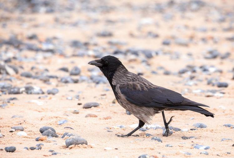 Close-up of a bird on sand