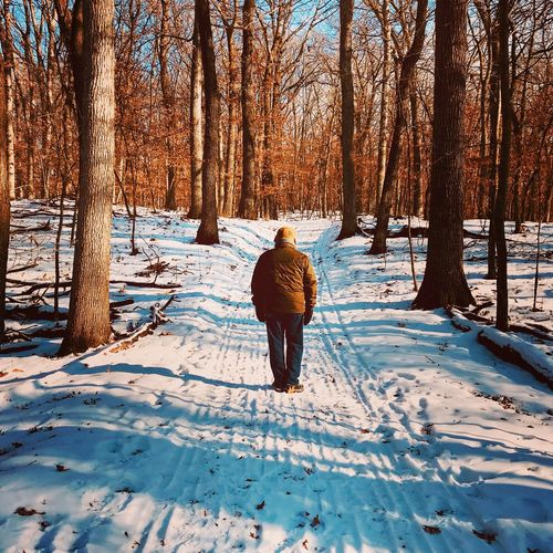 Winter Snow Cold Temperature Rear View Tree Nature Weather Beauty In Nature Outdoors Day Sunlight One Person Bare Tree Forest Warm Clothing Frozen Tranquility Tree Trunk Scenics