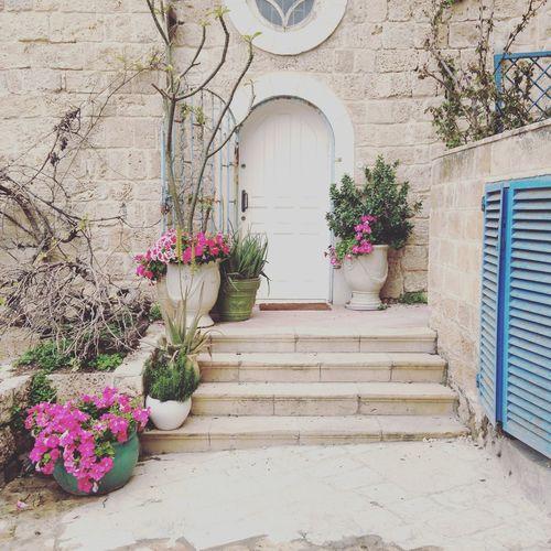 Door Doorway Flowerpots Israel Pot Streetphotography Telaviv Telavivcity