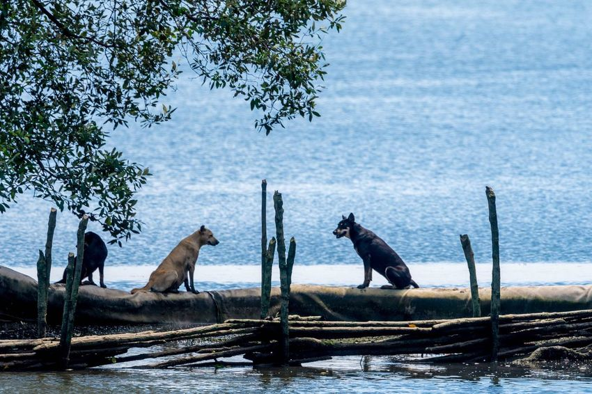 Dogs Animals In The Wild Two Animals Animal Wildlife Animal Themes Wild Dogs