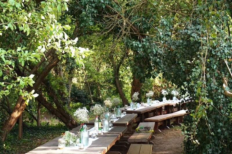 Celebrating Table Calebration Married Plant Tree Growth Nature Green Color Day Tranquility Outdoors Beauty In Nature Architecture No People Wood - Material Sunlight Park - Man Made Space Park