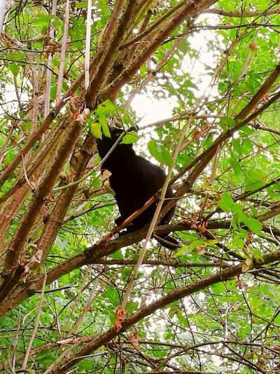 Tree Day Outdoors Nature Animal Themes Krümel❤️ Black Cat
