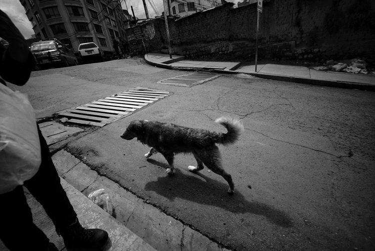 Low section of man with dog on street
