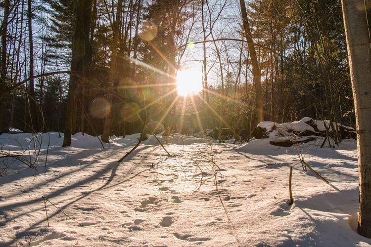 Dreams Snow Winter Cold Temperature Sunlight Tree Sun Lens Flare Sunbeam Nature Beauty In Nature Outdoors Scenics Landscape Day Tranquility No People Sky Nature Leaf Winter Detail Arts Culture And Entertainment Fineart_photo Canon Canon70d The Great Outdoors - 2017 EyeEm Awards The Great Outdoors - 2017 EyeEm Awards EyeEm Selects