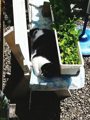 Nachbars Katze neben meinen Radieschen... Daily Life Of A Lake's Kid