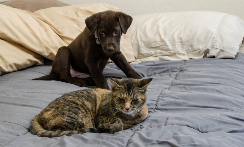 Cat And Dog Relaxing On Bed At Home