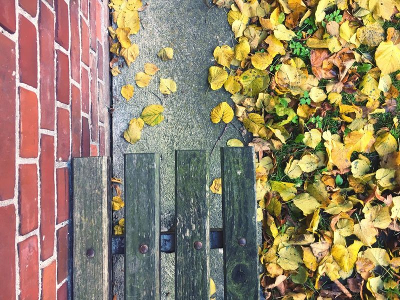 Autumn Leaf Leaves Yellow Change Outdoors Day No People Nature Maple Leaf Close-up Fragility Bench Flower Wood Old Bricks Brick Wall Yellow Leaves Red Concrete