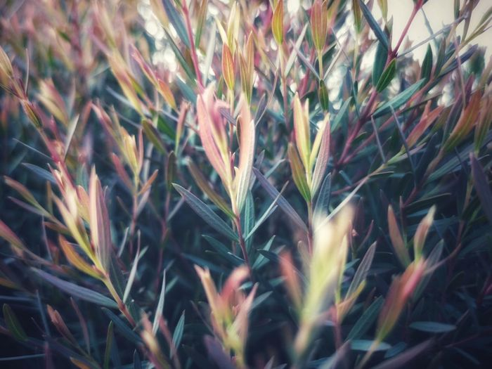 Close-up of stalks in field