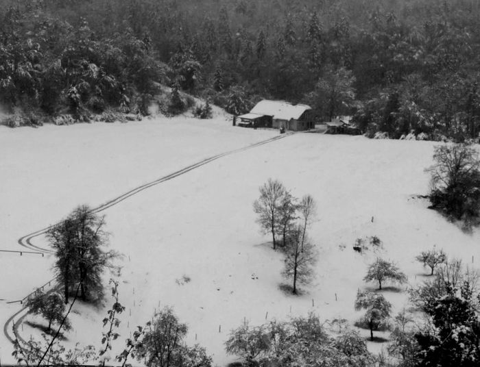 Beauty In Nature House Landscape Nature No People Outdoors Path Radovljica Slovenia Snow Tranquil Scene Tranquility Tree Winter Blackandwhite Black And White Lost In The Landscape Shades Of Winter