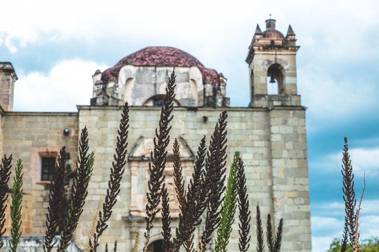 Close-Up Of Plants Against Church Of Santo Domingo De Guzman