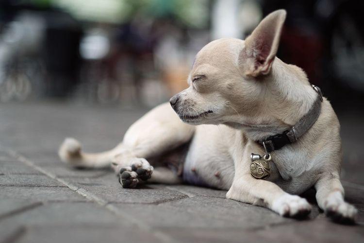 Animal EyeEmNewHere Dog Long Goodbye