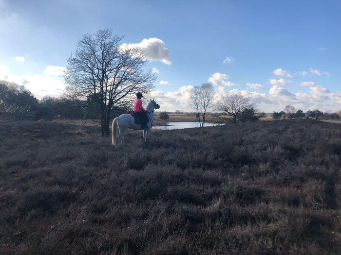 Kampina Horse