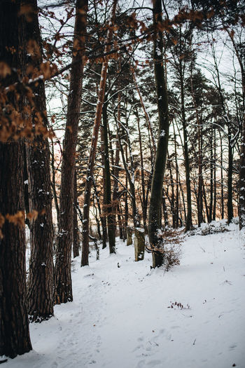 Shot with Nikon d610 + Sigma 35mm 1.4 ART www.instagram.com/pontosanpele www.pelephotography.com Forest Path Forest Walk Nikon D610 Transylvania Beautiful Light Beauty In Nature Forest Forest Trees Outdoors Pele Photography Snow Winter