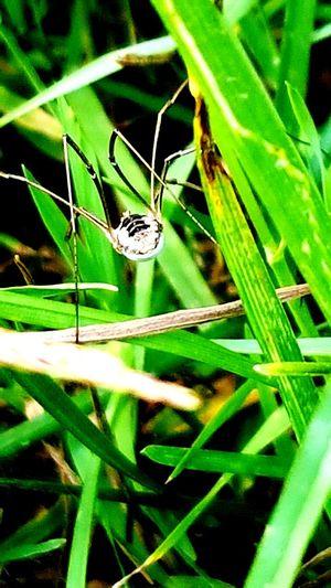 arachnide,