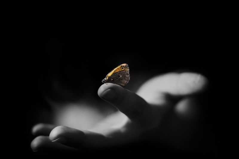 Cropped image of person holding butterfly against black background