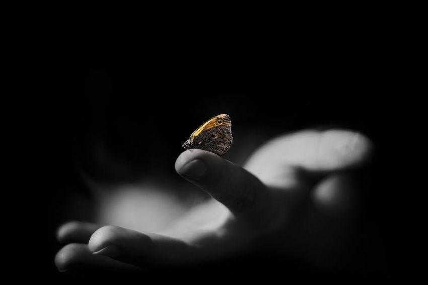 Moth on finger Moth Finger Gently Blackandwhite Butterfly Market Reviewers' Top Picks