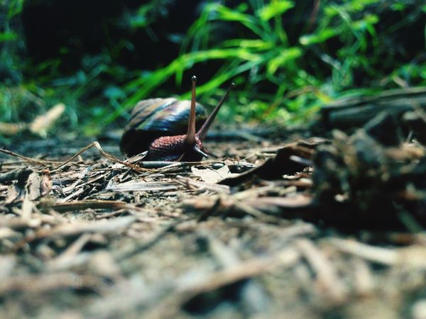 Snail. Capture The Moment