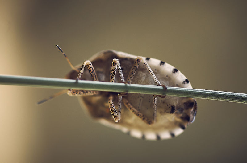 Close-up of insect on metal