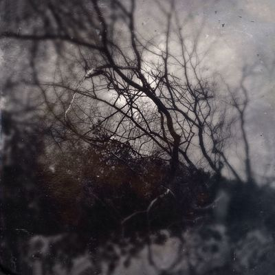 Through the wood near the Cotswold Way Painswick Shootermag NEM Landscapes NEM Black&white