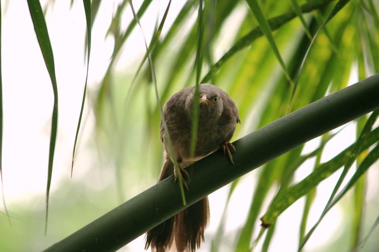 Angry Bird Bird Perching Focus On Foreground Palm Leaf Bamboo - Plant Green Color Animals In The Wild One Animal Vertebrate Plant Leaf Animal Animal Wildlife Nature Tree Branch No People Animal Themes Plant Part