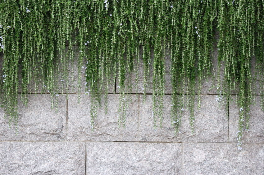 green grass decor on cement block wall Decor Grass Light Natural Wall Backgrounds Beauty Beauty In Nature Block Cement Close-up Day Decoration Full Frame Green Color Growth Moss Nature No People Outdoor Outdoors Pattern Plant Tranquility Tree