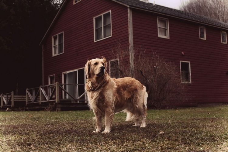 Dog The Explorer - 2014 EyeEm Awards