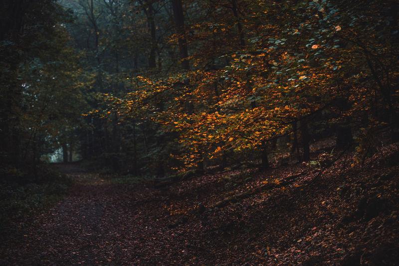 Spilled leaves