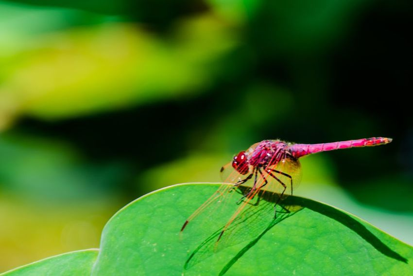 Macro Macro Photography Insect Animal Themes Animals In The Wild Green Color One Animal Leaf Close-up Nature Focus On Foreground Outdoors No People Day Beauty In Nature Plant Animal Wildlife Freshness Damselfly