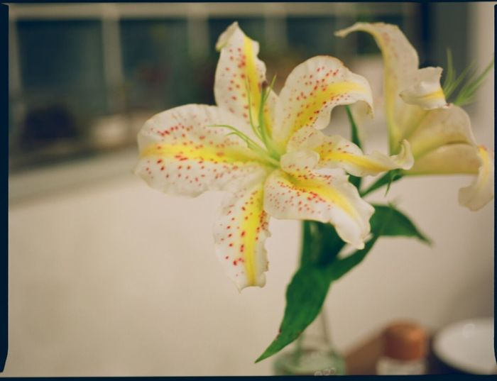 Beauty In Nature Close-up Film 6 Flower Flower Head Fragility Growth Nature No People Plant